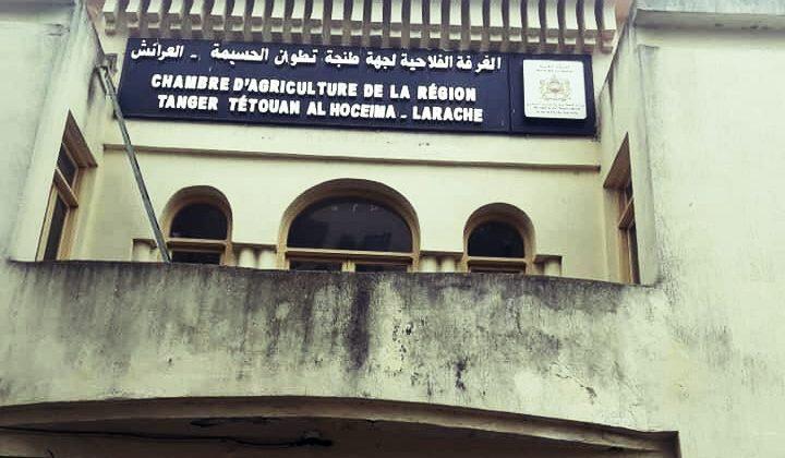 التجمع الوطني للأحرار يترأس الغرفة الفلاحية لجهة طنجة-تطوان-الحسيمة.